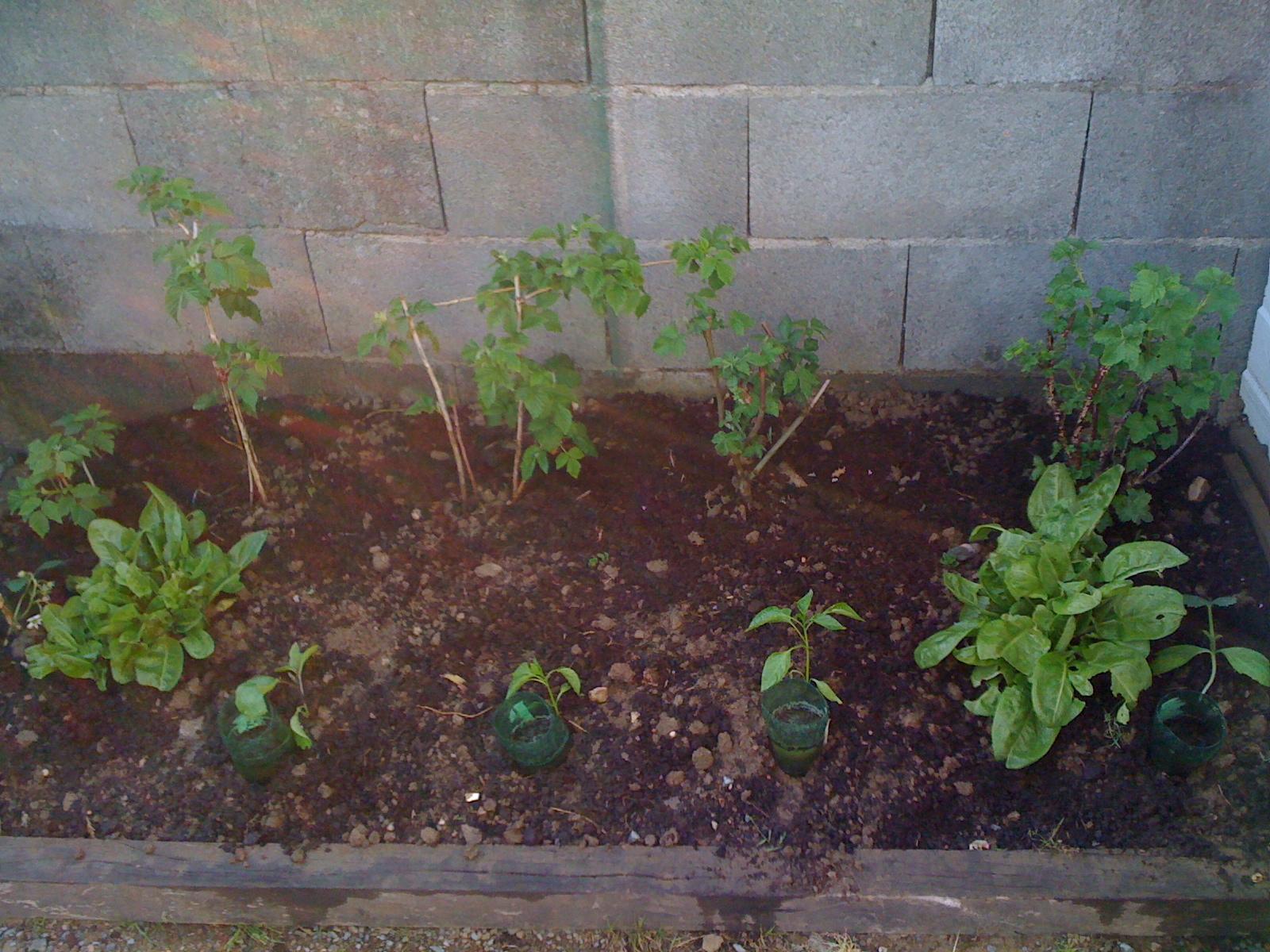 Vue générale du potager